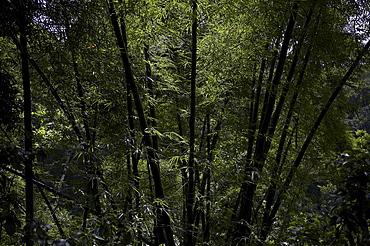 Jamaica. Tropical vegetation near montego bay