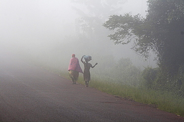 Uganda walking in the mist of early morning, kayunga district