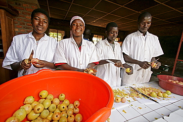 Burundi agakura, a youth agricultural project in gitera. Jam making. Students peeling guavas. From left to right: minani revata (18), kabura seraphine (20), bakundukize odette (22), nkurunziza desire (24)