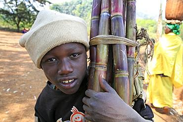 Burundi boy carrying sugar cane, gitera.