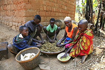 Burundi nduwamahoro, active non,violence peace building project, supported by sciaf. In the home of grandmother ntezahorigwa pelagie, 60. The family preparing food: taking beans from their pods, cleaning peas and peeling cassava, their staple diet.