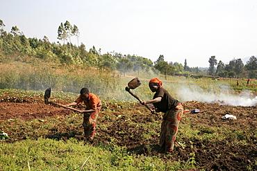 Burundi farmers of gitega.