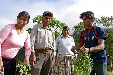 BOLIVIA Plant for processing medicinal and aromatic herbs, Chizchipani, Caranavi. The project of FUNDAWI. Local farmers visiting the demonstration plot