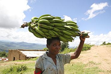 Tanzanian woman carrying bananas, kighare, same, in the north-east near kilimanjaro