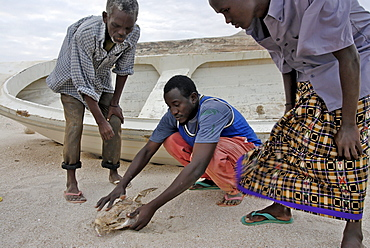 Eyl is a town in somalias puntland state. The prominent clan in eyl district are yonis idiris, a sub-clan of isse mahamud, which in turn is a sub-clan of majeerteen. Eyl is near the hafun peninsula, the location of most of somalias casualties from the 2004 indian ocean tsunami., the tsunami resulted in the death of some 300 people and extensive destruction of shelters, houses and water sources as well as fishing gear. The livelihoods of many people residing in towns and small villages along the somali indian ocean coastline, particularly in the northern regions, were devastated