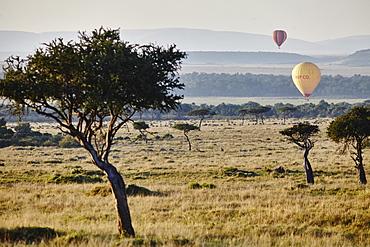 Hot air ballons lifting up in the sunrise light in the Maasai Mara, Kenya, East Africa, Africa
