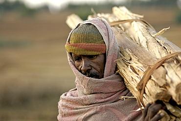 Man carrying eucalyptus wood, ethiopia