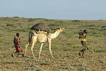 Somali nomads walking with camel, somalia