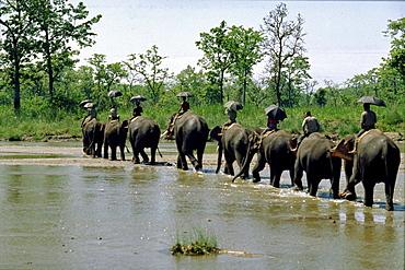 Caravan crossing rapti river, chitwan, nepal