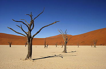 Dead trees and sand dunes at dead vlei, namibia