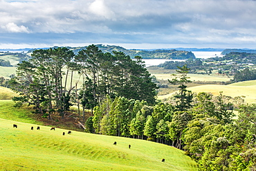 Looking out to Snells Beach, Auckland Region, North Island, New Zealand, Pacific