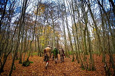 Guns walking to the next drive, Somerset, England, United Kingdom, Europe