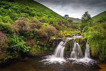 Water cascading over rocks on moorland habitat, Fairbrook, Peak District National Park, Derbyshire, England, United Kingdom, Europe