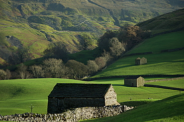 Old hay barns, above Muker, Swaledale, Yorkshire Dales National Park, Yorkshire, England, United Kingdom, Europe