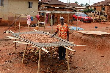 Cocoa Farmer John Essel, aged 60, Abamkrom, Ghana, West Africa, Africa