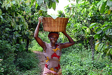 Lavtey Amds, a cocoa farmer, happy due to VSO present in Ghana, West Africa, Africa