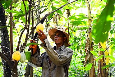 Akumrenu Emmanuel, a cocoa farmer, happy due to VSO present in Ghana, West Africa, Africa