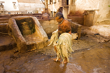 The dyeing vats at the tannery in the old town of Fes, Morocco, North Africa, Africa