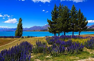 Lake Tekapo, Mackenzie Country, Canterbury, South Island, New Zealand, Pacific