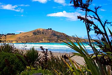 Waikouaiti Reserve, Otago, South Island, New Zealand, Pacific - 1214-7