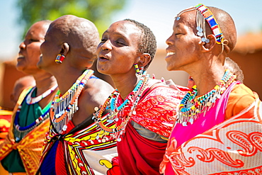 Masai women singing and dancing, Masai Mara, Kenya, East Africa, Africa