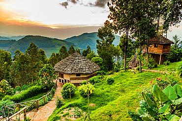 Agandi Eco Lodge (the huts), Bwindi Impenetrable Forest National Park, UNESCO World Heritage Site, Uganda, East Africa, Africa