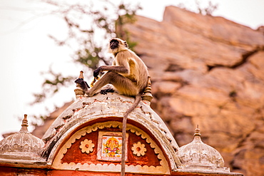 Monkey sitting in abandoned cistern, Jaipur, Rajasthan, India, Asia