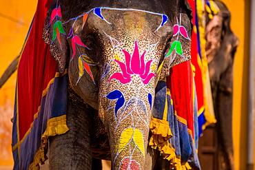 Painted elephant, Amer Fort, Jaipur, Rajasthan, India, Asia