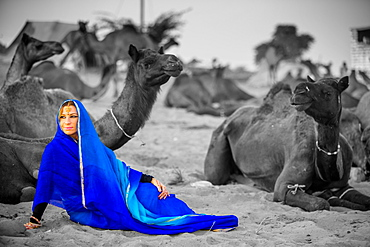 Girl with camels at the Pushkar Camel Fair, Pushkar, Rajasthan, India, Asia