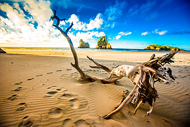 Driftwood in Golden Bay, Tasman Region, South Island, New Zealand, Pacific