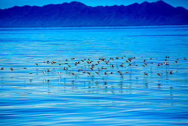 Birds, Whale Watching, Magdalena Bay, Mexico, North America