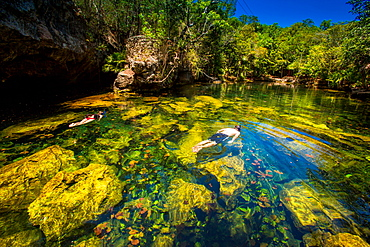 Couple snorkels in the cenotes of Chiken-ha, Tulum, Mexico, North America
