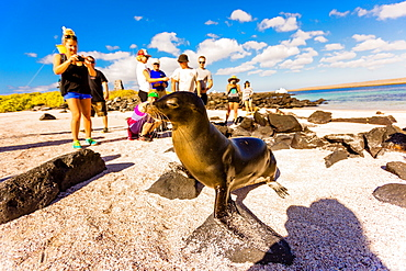 Sea lions on Floreana Island, Galapagos Islands, Ecuador, South America