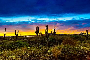 Sunset on Isabella Island, Galapagos Islands, Ecuador, South America