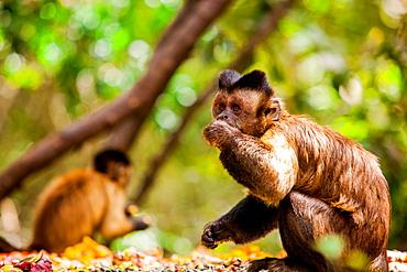 Monkey Reserve, Johannesburg, South Africa, Africa
