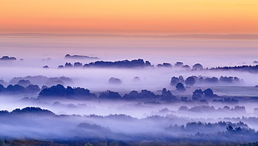 Layers of mist surround the trees of Delamere Forest on a cold autumn dawn in Cheshire, England, United Kingdom, Europe