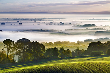 Rolling fields extend from Eddisbury Hill to the dawn landscape with autumn mist lying on the Cheshire plain, Cheshire, England, United Kingdom, Europe