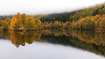 Trees in autumn colour reflected like in a mirror in Loch Tummel, Scottish Highlands, Scotland, United Kingdom, Europe