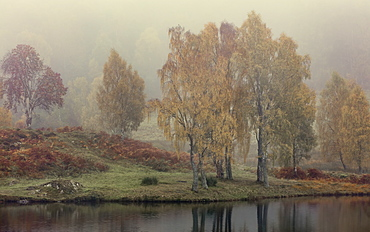 Autumn colour along the shore of Loch Tummel with mist lingering in the valley, Scottish Highlands, Scotland, United Kingdom, Europe