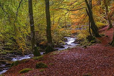 Autumn in the Birks of Aberfeldy, Scottish Highlands, Scotland, United Kingdom, Europe