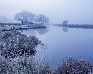 Reeds and trees on the banks of Elterwater coated in frost on a foggy autumn morning in the Lake District National Park, UNESCO World Heritage Site, Cumbria, England, United Kingdom, Europe