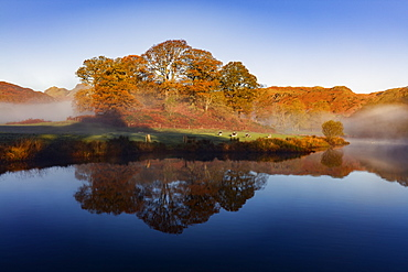 Autumn mists swirl around the coppery red trees on the banks of Elterwater on a calm morning in the Lake District National Park, UNESCO World Heritage Site, Cumbria, England, United Kingdom, Europe
