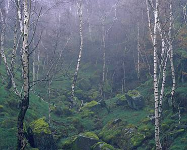 Mother nature recolonises an abandoned quarry in the Peak District, Derbyshire, England, United Kingdom, Europe