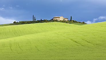 A single Tuscan farmhouse perched on top of a hill beyond verdant rolling green fields of the Val d'Orcia, UNESCO World Heritage Site, Tuscany, Italy, Europe