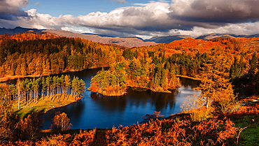 Autumn morning at Tarn Hows in the Lake District National Park, Cumbria, England, United Kingdom, Europe