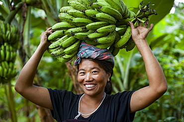 A woman collects bananas and balances them on her head to carry, Manipur area, India, Asia