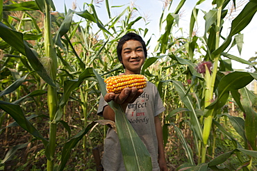 A boy holds up a cob of corn, among the corn plants in Mongar District, Bhutan, Asia