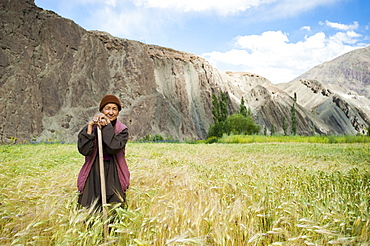 A woman stands to have her picture taken while working in a wheat field in Ladakh, India, Asia