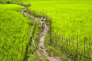 A pathway through the rice paddies in the Chittangong Hill Tracts, Bangladesh, Asia