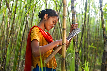 A girl harvests sugarcane in the Rangamati District in the Chittagong Hill Tracts, Bangladesh, Asia
